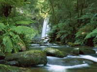 Hopetoun Falls, Aire River, Otway National Park, Victoria, Australia.jpg