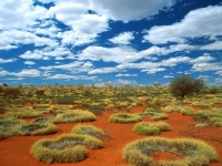 Old Spinifex Rings, Little Sandy Desert, Australia.jpg