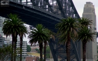 Bridge_Palm_trees.jpg