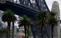 Bridge_Palm_trees.jpg