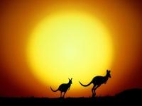 the-kangaroo-hop-wallpapers_9351_1600x1200.jpg